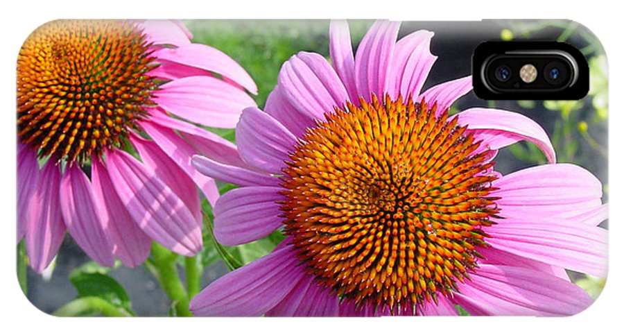 Flower IPhone X Case featuring the photograph Purple Coneflowers by Suzanne Gaff