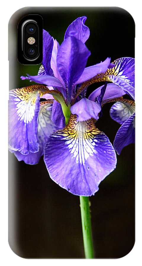 3scape IPhone X Case featuring the photograph Purple Iris by Adam Romanowicz