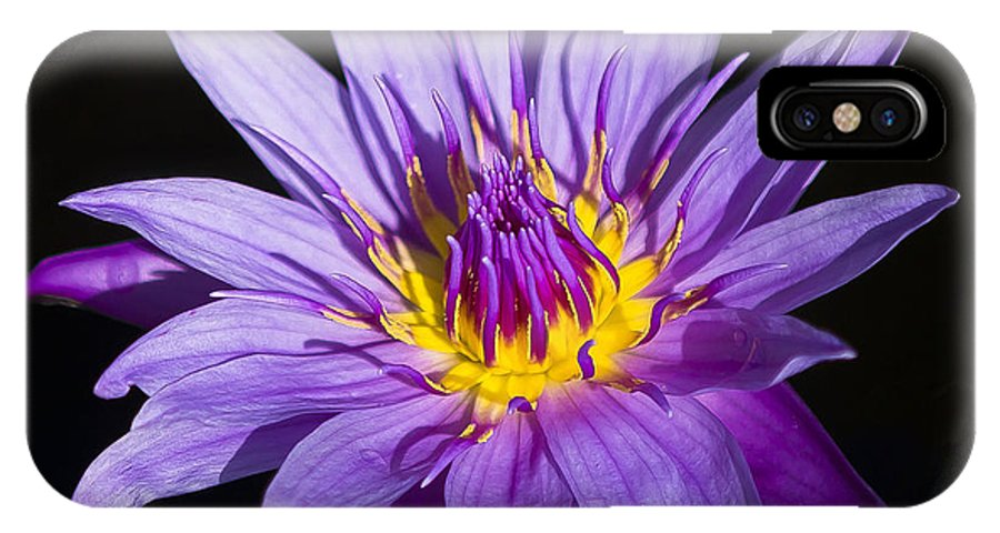 Florida IPhone X Case featuring the photograph Purple Lilly by Sean Allen