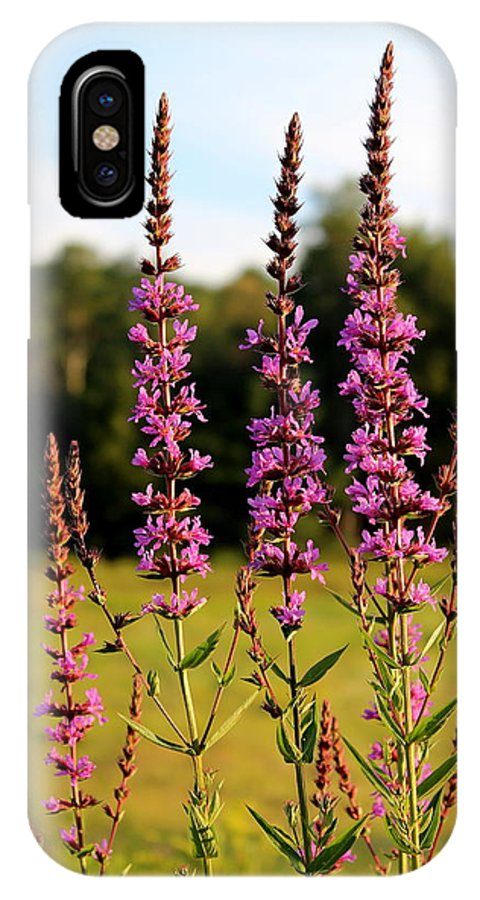 Wild IPhone X Case featuring the photograph Purple Loosestrife by Brian Lucia