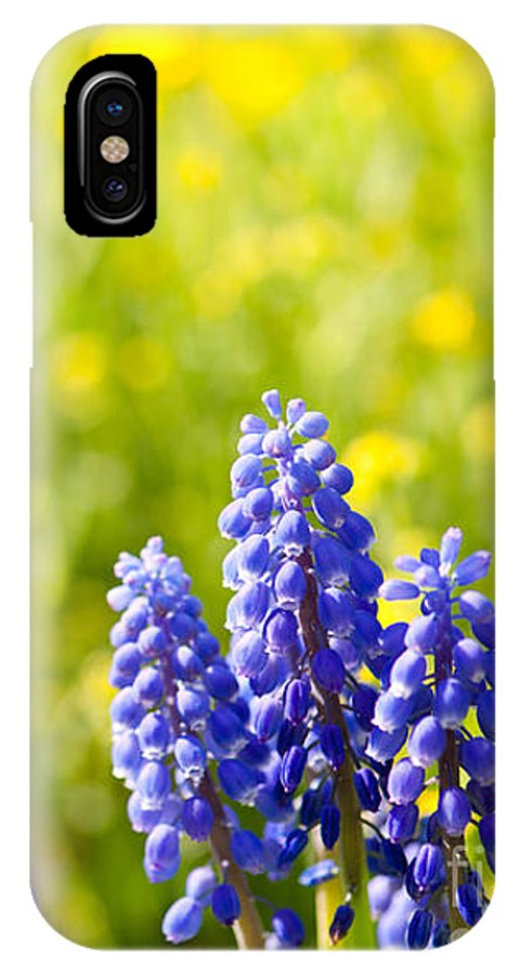 Abloom IPhone X Case featuring the photograph Blue Muscari Mill Bunches Of Grapes Close-up by Arletta Cwalina