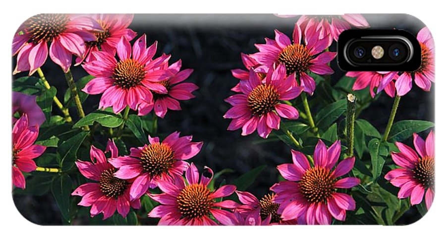 Flowers IPhone X Case featuring the photograph Purple Pow Echinacea by Michael Saunders