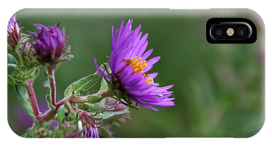 Flower IPhone X Case featuring the photograph Purple Profiles by Susan Herber