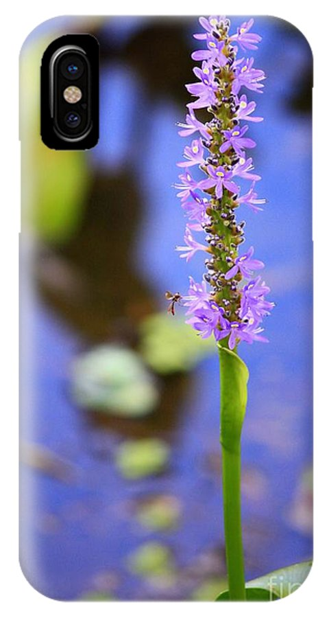 Pickerelweed IPhone X Case featuring the photograph Purple Swamp Flower by Carol Groenen