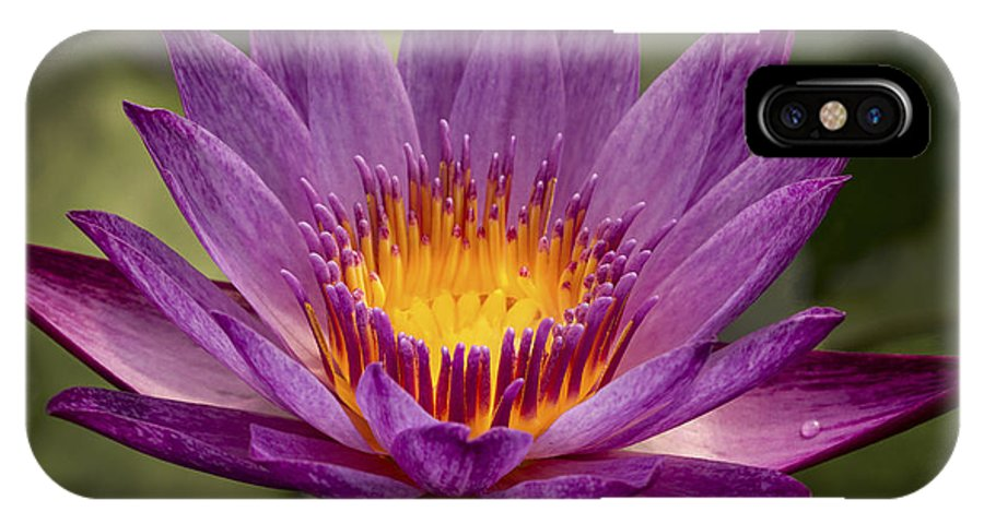 Pink Water Lily IPhone X Case featuring the photograph Purple Tropical Water Lily by Jean Noren