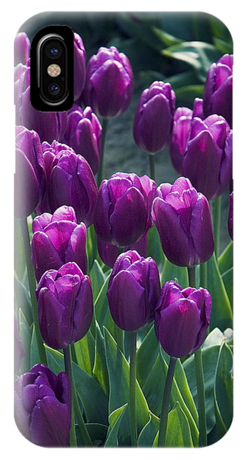 Tulips IPhone X Case featuring the photograph Purple Tulips by Yulia Kazansky