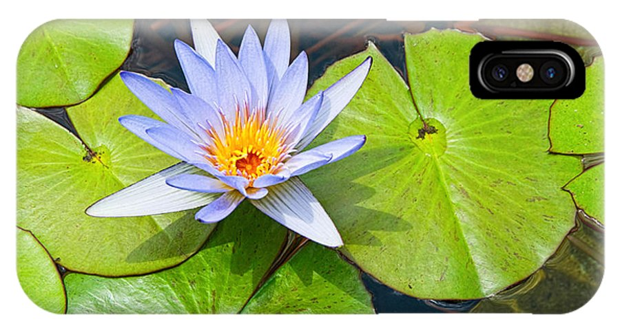 Water IPhone X Case featuring the photograph Purple Water Lily In Pond. by Jamie Pham