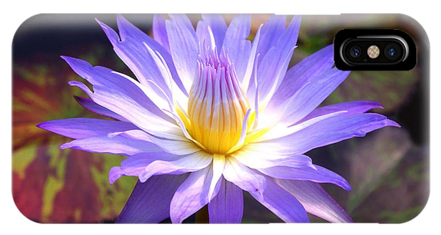 Floral IPhone X Case featuring the photograph Purple Waterlily With Fall Lilypads by Debra Orlean