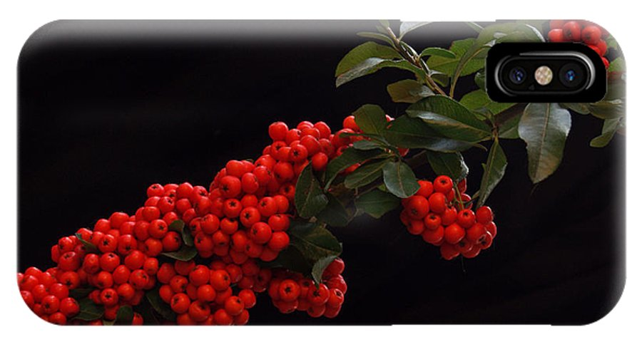 Winter IPhone Case featuring the photograph Pyracantha Berries On Black - Pennsylvania by Anna Lisa Yoder