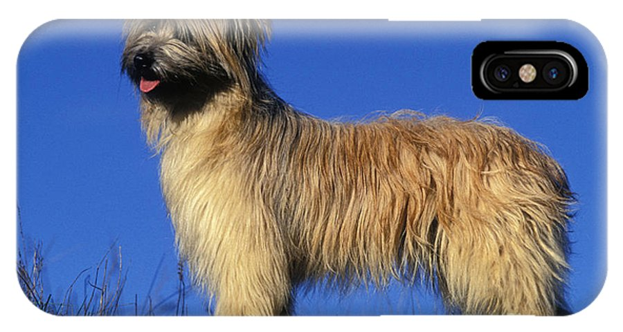 Pyrenean Shepherd IPhone X / XS Case featuring the photograph Pyrenean Sheepdog by Jean-Michel Labat