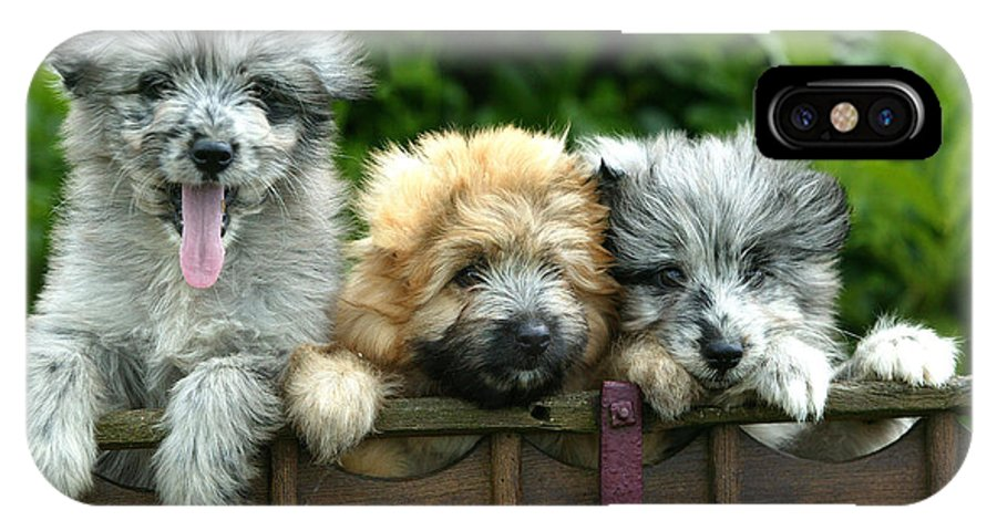 Little Pyrenean Sheepdog IPhone X / XS Case featuring the photograph Pyrenean Sheepdogs by Jean-Michel Labat
