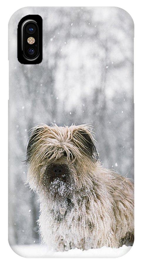 Pyrenean Shepherd Dog IPhone X / XS Case featuring the photograph Pyrenean Shepherd Dog by Jean-Paul Ferrero