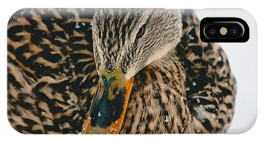 Ducks IPhone X Case featuring the photograph Quack by Pati Photography