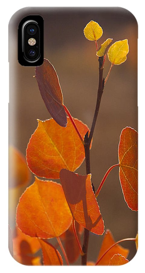 Tree IPhone X Case featuring the photograph Quaking Aspen In Color  #3749 by J L Woody Wooden