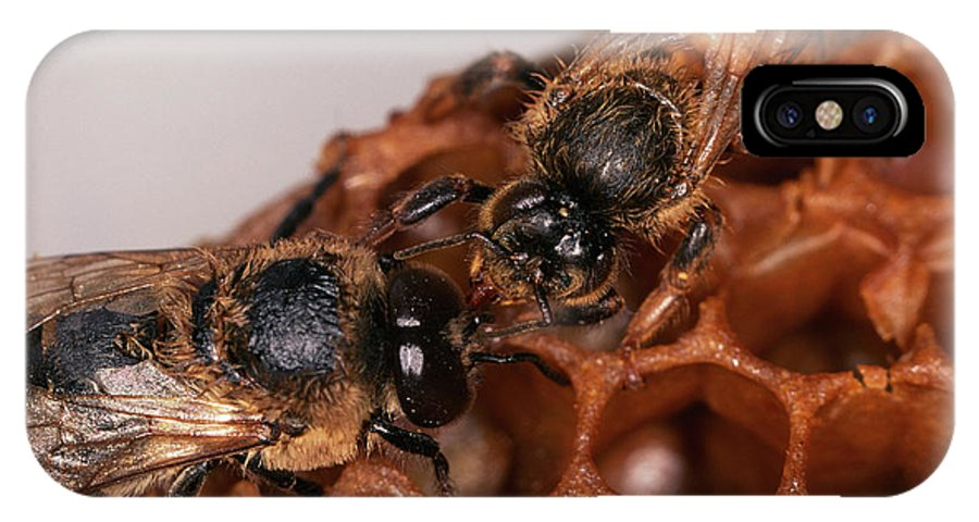 Honey Bee IPhone X Case featuring the photograph Queen And Drone Honeybees by Sinclair Stammers/science Photo Library