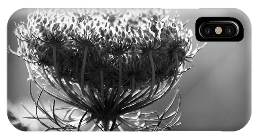 Queen IPhone X Case featuring the photograph Queen Annes Lace - Bw by Kenny Glotfelty
