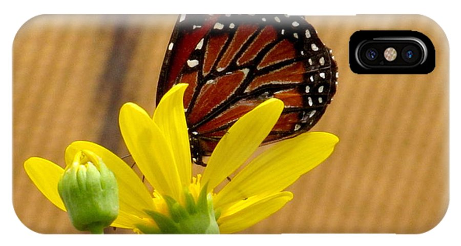 Queen Butterfly IPhone X Case featuring the photograph Queen Butterfly by Marilyn Smith