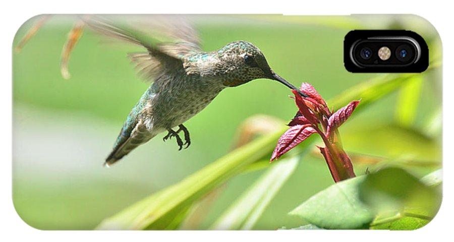 Hummingbird IPhone X Case featuring the photograph Quiet Flight by Debby Pueschel