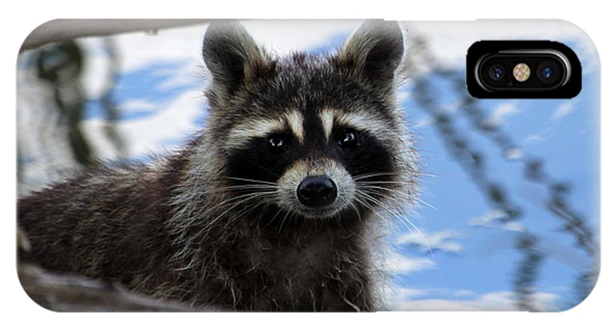 Raccoon IPhone X Case featuring the photograph Raccoon by Bruce Arnold