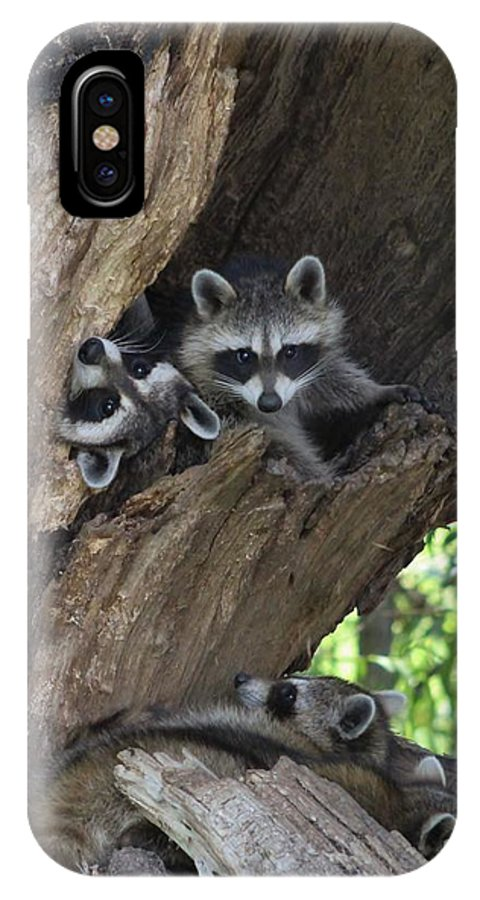 Raccoon IPhone X Case featuring the photograph Raccoon Family Time by Connie Mueller