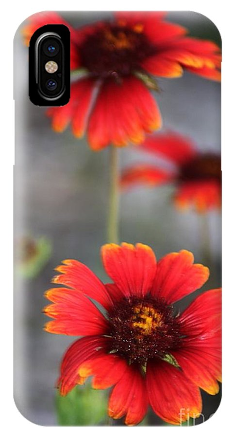 Florida IPhone X Case featuring the photograph Radiant by Lora Wood