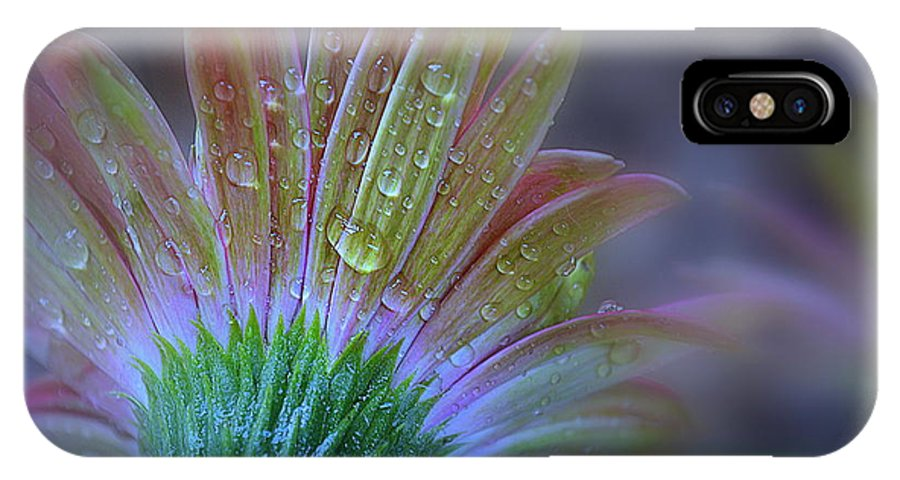 Daisy IPhone X Case featuring the photograph Rain Petals by Michelle Ayn Potter