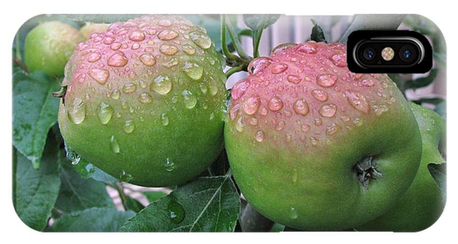 Apples IPhone X Case featuring the photograph Rain Soaked by Lora Fisher Photography