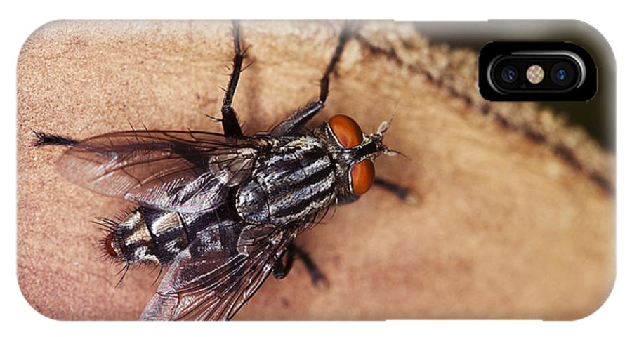 Fly IPhone X Case featuring the pyrography Rainbow Fly by Sammuel Hernandez