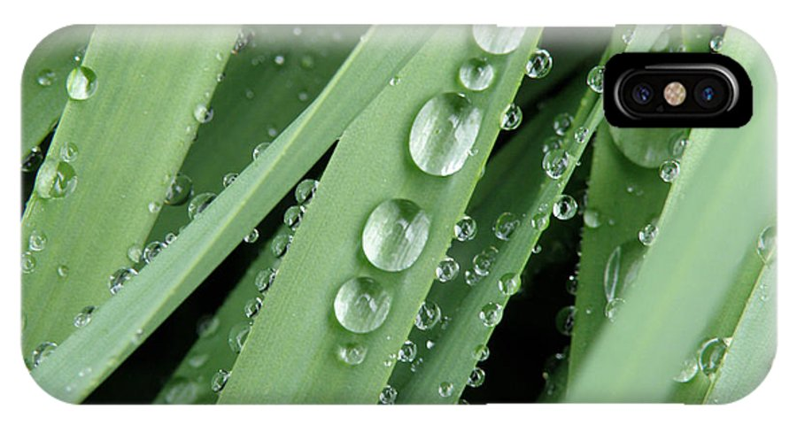 After The Storm IPhone X Case featuring the photograph Raindrops On Blades Of Grass by Amy Cicconi