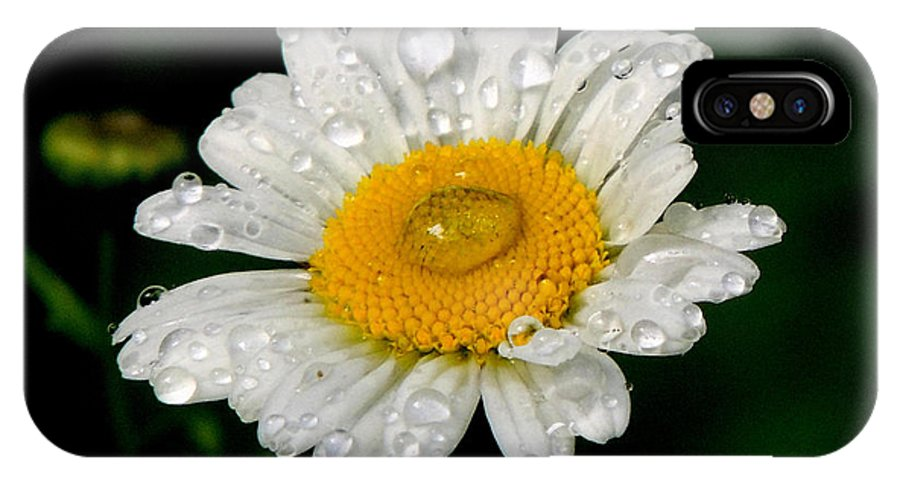 Daisy IPhone X / XS Case featuring the photograph Raindrops On Daisy by Mary Williamson