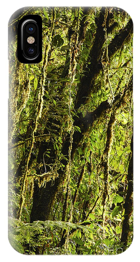Monteverde Reserve Costa Rica Rainforest Fern Ferns Tree Trees Branch Branches Leaves Leaves Plant Plants Nature Vine Vines Forest Forests Rainforest Rainforests IPhone X Case featuring the photograph Rainforest Vines by Bob Phillips
