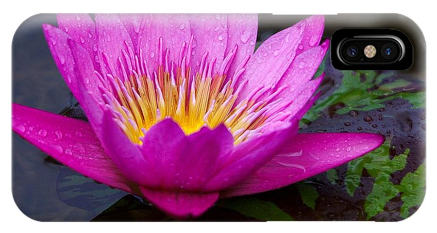 Roy Williams IPhone X Case featuring the photograph Rainy Day Water Lily Reflections II by Roy Williams