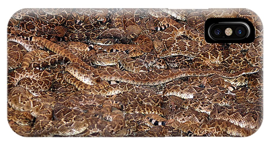 Rattlesnake IPhone X Case featuring the photograph Rattle Snake Round-up by Jack Thomas