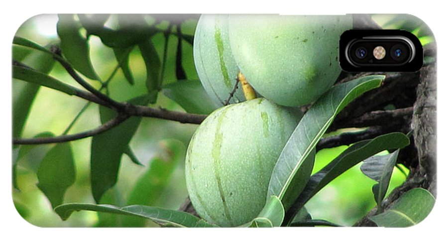 Mango IPhone X Case featuring the photograph Raw Mangoes by Joe Zachariah