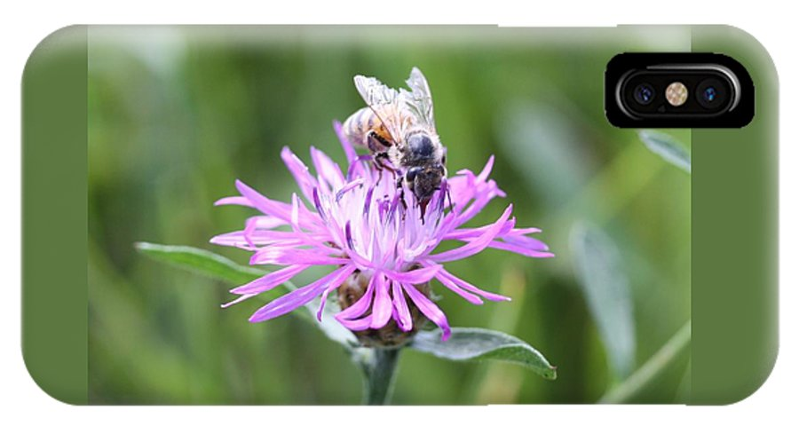 Honeybee IPhone X Case featuring the photograph Reaching For Nectar by Lucinda VanVleck