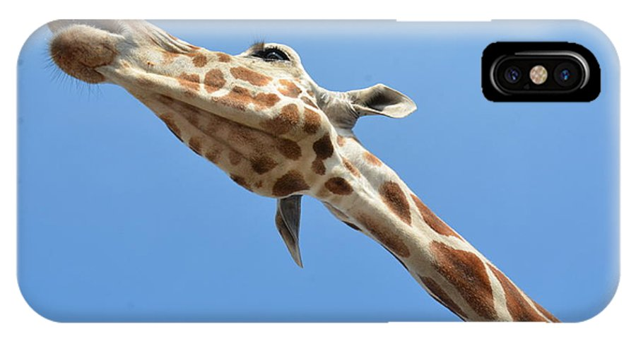 Giraffe IPhone X Case featuring the photograph Reaching For The Sky by Randy J Heath