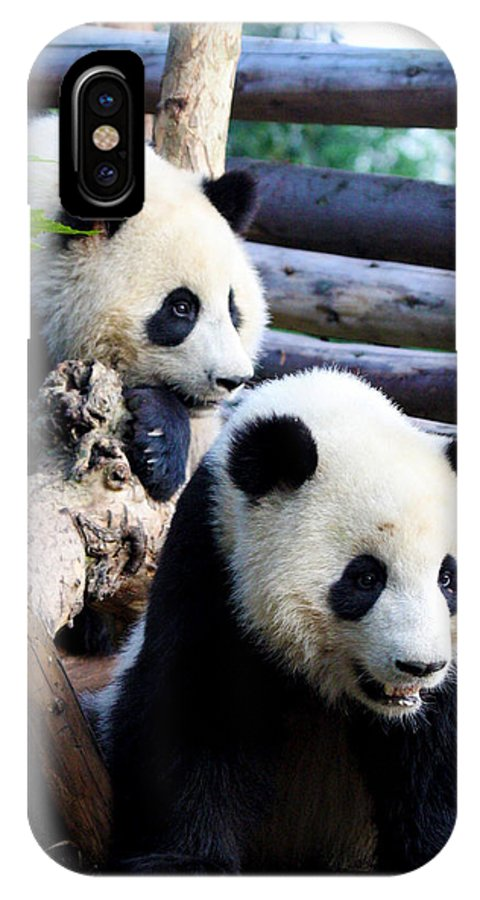 Panda IPhone X Case featuring the photograph Ready For Discovery by Travel Photographer