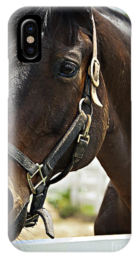 Equestrian IPhone X / XS Case featuring the photograph Ready For My Close Up by Nancy Stein
