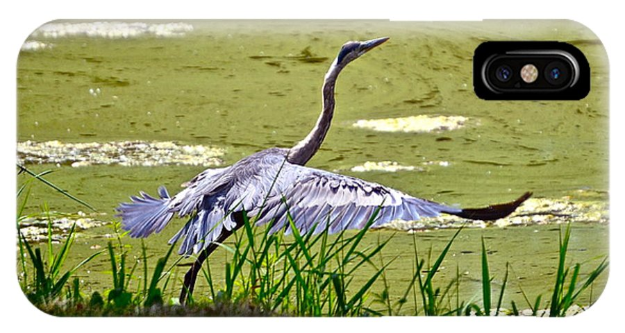 Blue Heron IPhone X Case featuring the photograph Ready For Takeoff. by Mark Winter