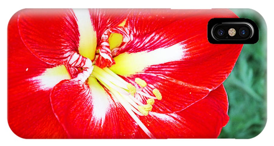 Flowers IPhone X / XS Case featuring the photograph Red Amaryllis by Rich Walter
