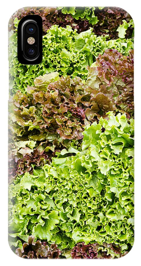Agriculture IPhone X Case featuring the photograph Red And Green Leaf Lettuce by John Trax