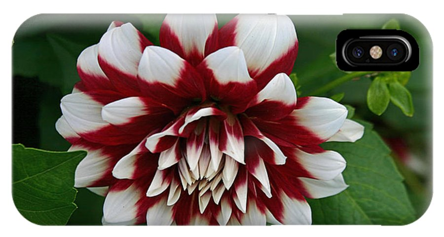 Flowers IPhone X Case featuring the photograph Red And White by Hugh Carino
