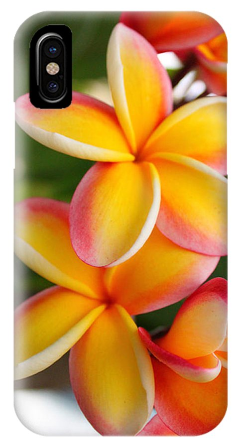 Red IPhone X / XS Case featuring the photograph Plumeria Smoothie by Brian Governale