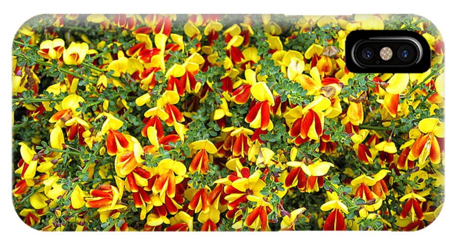 Scotland IPhone X Case featuring the photograph Red And Yellow by Timothy Hacker