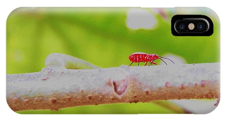 Red IPhone X Case featuring the photograph Red Aphid On A Limb by Walter Rickard