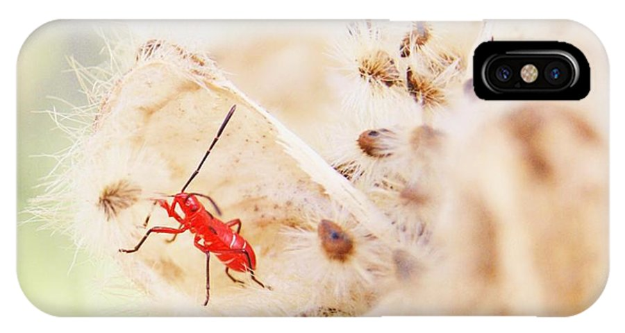 Red IPhone X Case featuring the photograph Red Aphid Seed Pod by Walter Rickard