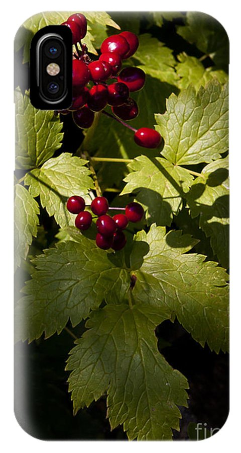 Berrry IPhone X Case featuring the photograph Red Baneberry  #8955 by J L Woody Wooden