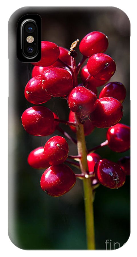 Berrry IPhone X Case featuring the photograph Red Baneberry  #8986 by J L Woody Wooden