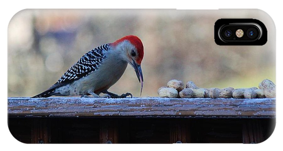 Red Bellied Woodpecker IPhone X Case featuring the photograph Red Bellied Woodpecker 2 by Connie Mueller