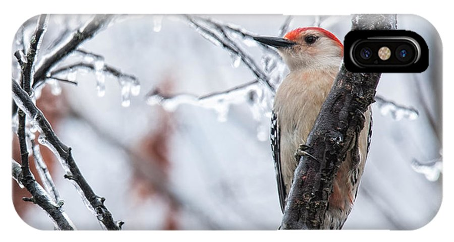 Red Bellied Woodpecker IPhone X Case featuring the photograph Red Bellied Woodpecker In Winter by Lara Ellis